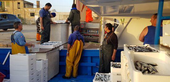 Fish tour in Terracina